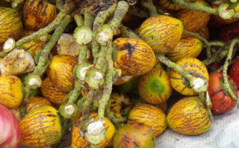 Pejibaye ou Palmier pêche