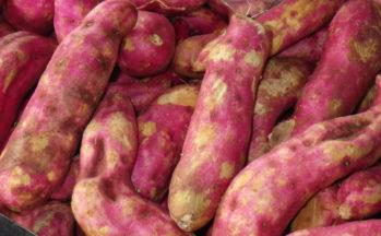Camote ou Patate douce (Costa Rica)