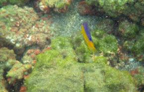 Bahia Drake (Costa Rica)