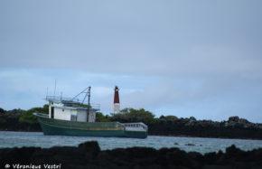 Equateur [Galapagos] - Ile Isabela
