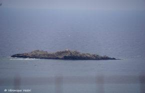 Grèce [Crète] - Paleochora - Ile Kekofti
