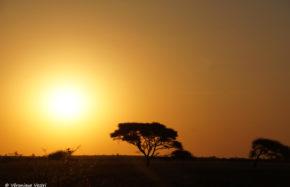 Kalahari (Botswana)