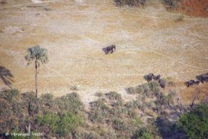 Okavango, éléphants (Botswana)