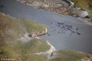 Okavango, Hippopotames (Botswana)