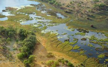 Okavango (Botswana)