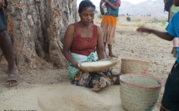 Camp Catta (Madagascar)