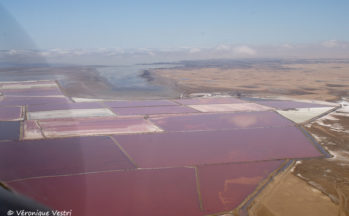Swakopmund, marais salants (Namibie)